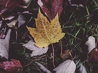 change yellow leaf
